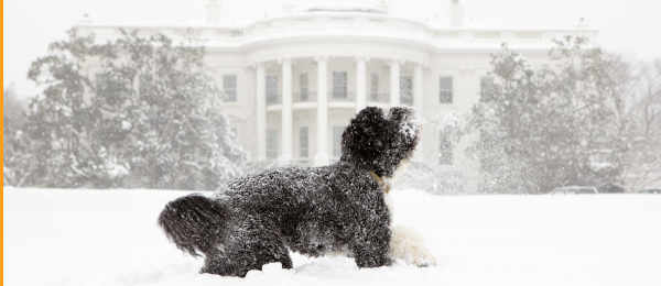Snowy Do at Whitehouse