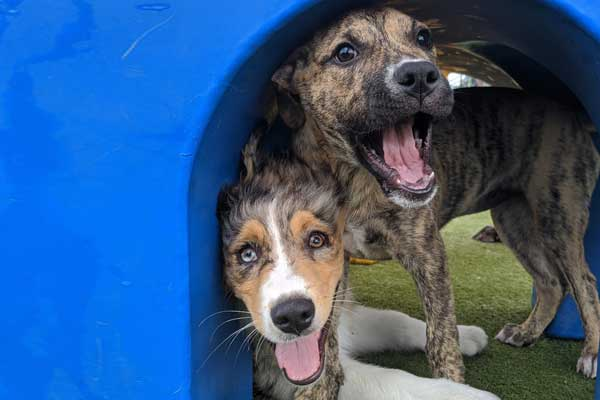 Two dogs playing on the playground